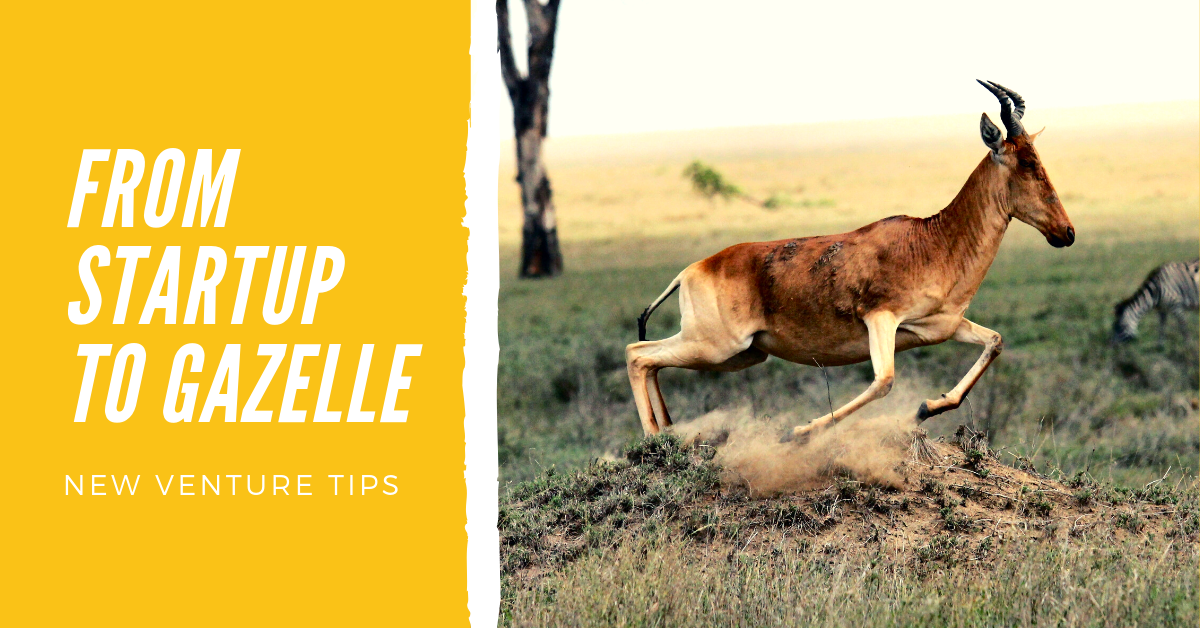 4 Tips for Entrepreneurs: From Startup to Gazelle